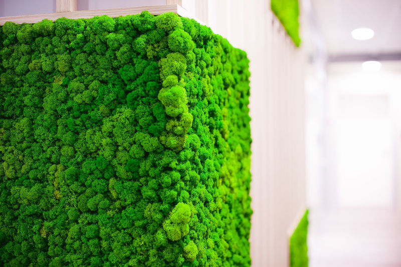Architecture Beauty In Nature Broccoli Close-up Day Focus On Foreground Food Food And Drink Freshness Green Green Color Growth Healthy Eating Hedge Indoors  Nature No People Plant Vegetable Wellbeing