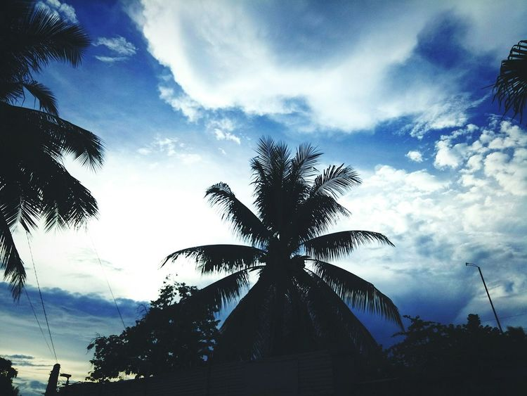 Lazy wednesday afternoon... Palm Tree Cloud - Sky Outdoors Mydays Cloudy Day Darkskies Lazy Day No People Nature Photography Photos Around You My Point Of View My Hobby Urban Landscape Urban Skyline Urbanexploration EyeEm LOST IN London EyeEm Selects EyeEmNewHere Eyeem Philippines EyeEm Gallery EyeEm Best Shots Eyeemphotography EyeEmBestPics Pinoypotograpiya Breathing Space Investing In Quality Of Life The Week On EyeEm