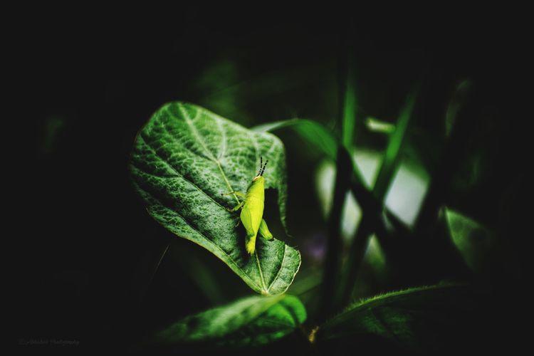 Leaves🌿 Garden