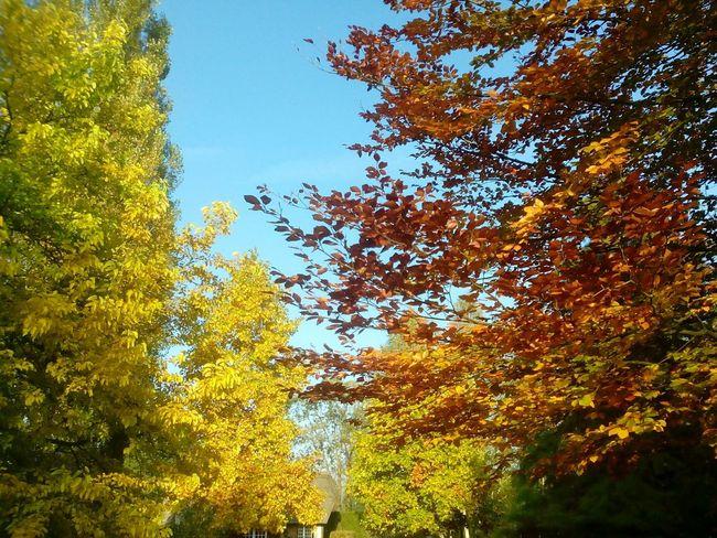 automne en Normandie France