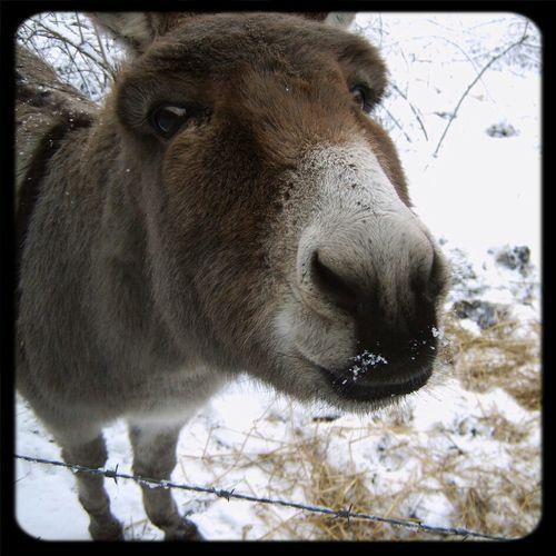 Kiss me! Joke Animals FUNNY ANIMALS Funny