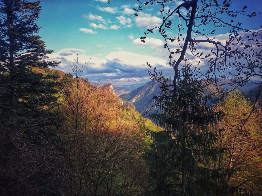 Blue Sunny Day Spring Springtime Pieniny Poland Poland Nature Pieniny Forrest Nature_collection Flora Forrest Photography Forrestwalk Mountains Mountain View Forrest Path View From Above View