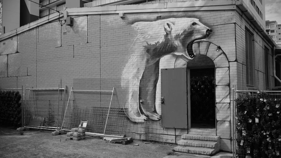 Architecture Black & White Black And White Blackandwhite Building Exterior Built Structure Day Fujifilm Graffiti Monochrome No People Outdoors Painting Polar Bear Street Street Art Streetart Streetphotography