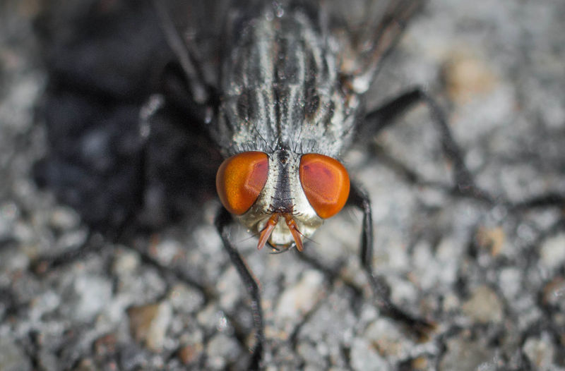 Arthropod Fly Animal Animal Body Part Animal Eye Animal Themes Animal Wildlife Animal Wing Animals In The Wild Close-up Day Insect Invertebrate Nature No People One Animal Selective Focus