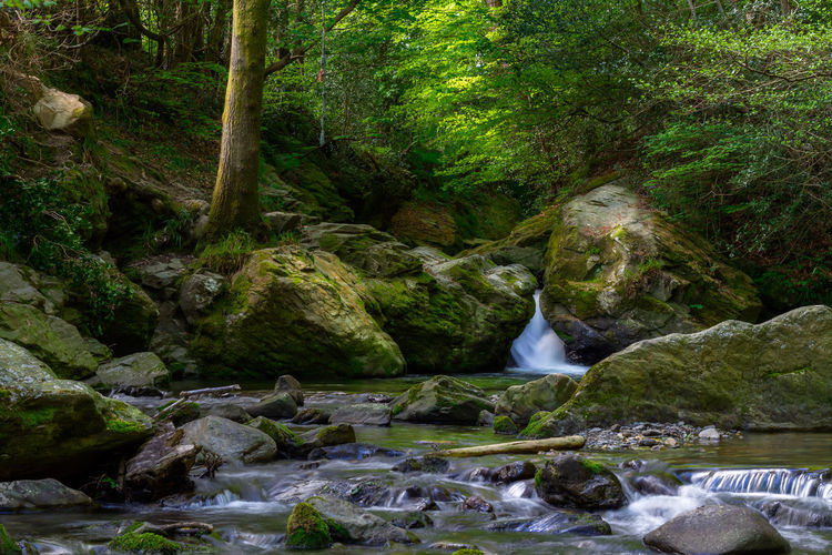 Tree Water Waterfall Forest River Motion Moss Green Color Flowing Water Long Exposure Light Painting Stream - Flowing Water Flowing Power In Nature Countryside Rock - Object Rock Formation Lush - Description Stream
