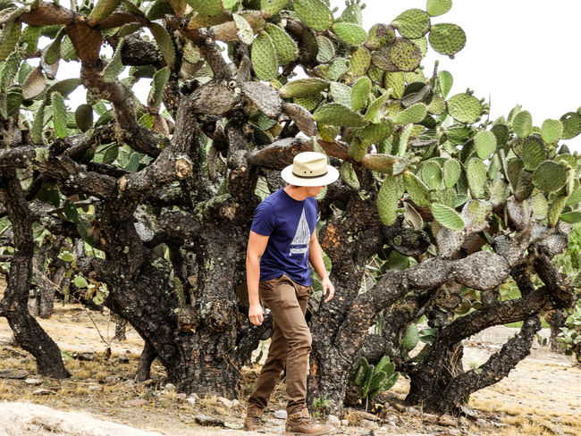 Hat Straw Hat Sun Hat One Person Full Length Casual Clothing Day Cowboy Hat Outdoors Standing Adult Agriculture Real People Tree Growth Mature Adult People Adults Only Rural Scene One Man Only Mexico Ancient History Guanajuato, México Man Be. Ready.