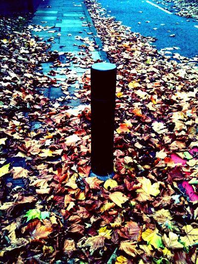 Autumn loneliness Autumn Loneliness