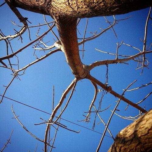 El árbol de la plaza del barrio viejo no crece más Se ha quedado quietito todo pelado por qué será La tierra está tan seca en cualquier momento se va a quebrar Pareciera que el cielo se fue olvidando cómo llorar Vicentico