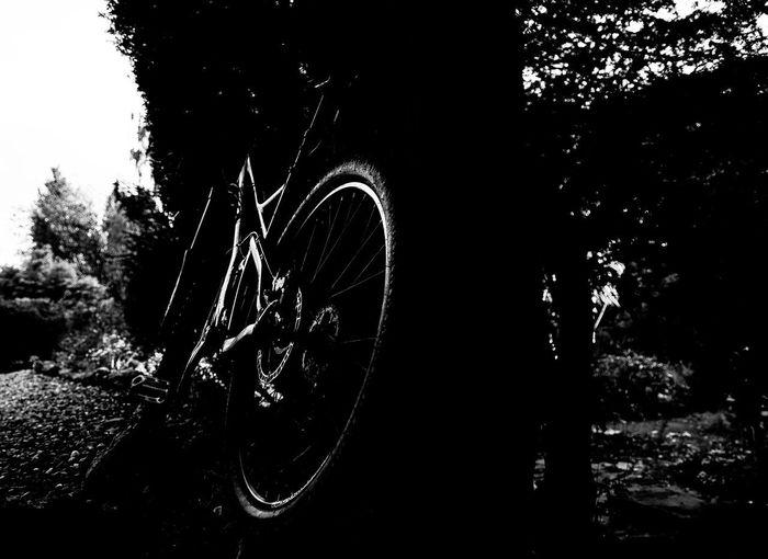Tree Bicycle No