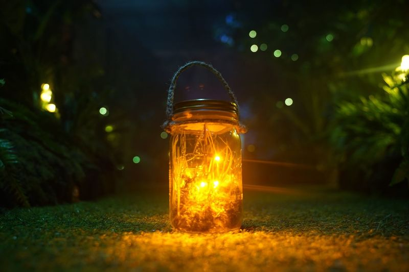 Night Lights Night Photography Camping Fairy Lights HongKong EyeEm Selects EyeEm Best Shots EyeEm EyeEmNewHere EyeEm Nature Lover Illuminated Night Glowing Jar No People Lighting Equipment Glass - Material Plant Nature Transparent Container Selective Focus Close-up Light - Natural Phenomenon Outdoors Land Tree Electricity  Field Table