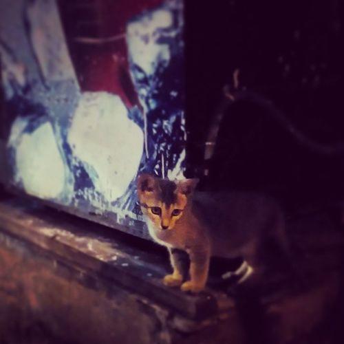 MiMi! Cat Catsofinstagram Ilovecats Cutie afterwork kitten adorable baby eternallove instacat instalove instacapture instalike instahappiness foreverlove nothinglikeacat