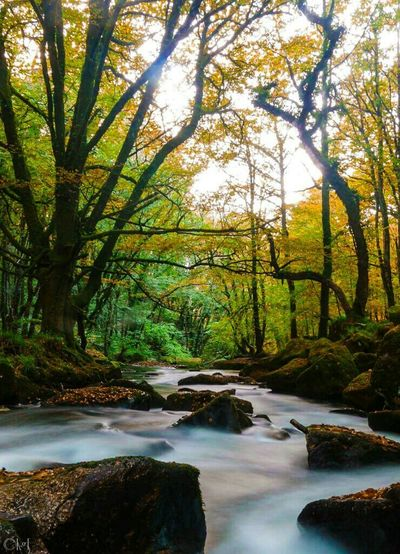 Woodlands Rivers Water Colours Cornwall Nature Ladyphotographerofthemonth Countryside No People Landscapes