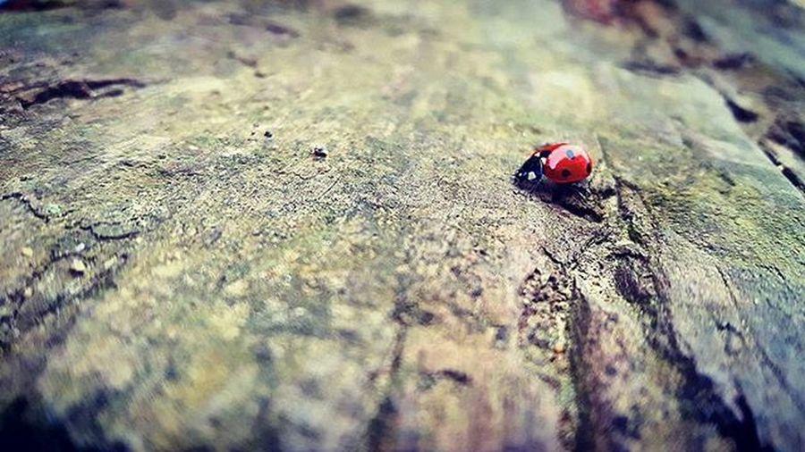 Ladybug Insect Wildlife Nature Sleepers Photograpy Nature Vaquitadesanantonio