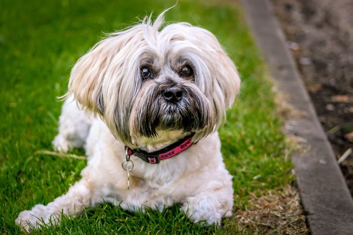 Dog Pets Domestic Animals Animal Themes Grass One Animal Field Grassy Mammal Portrait Looking At Camera Young Animal Growth Focus On Foreground Outdoors Day Loyalty Pampered Pets Animal Looking The Week On EyeEm