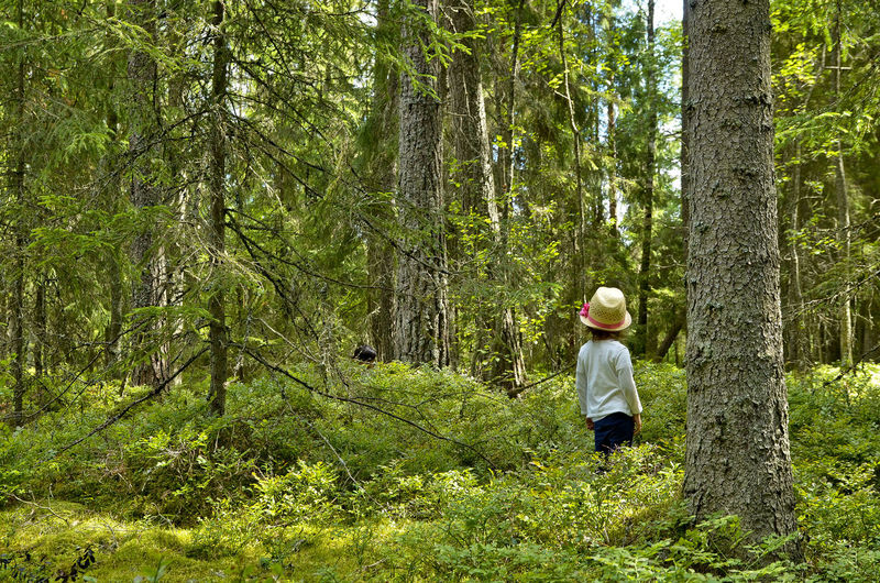 Rear view of child standing amidst trees