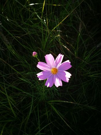 20th September, 010 Siheung South Korea Autumn Flower