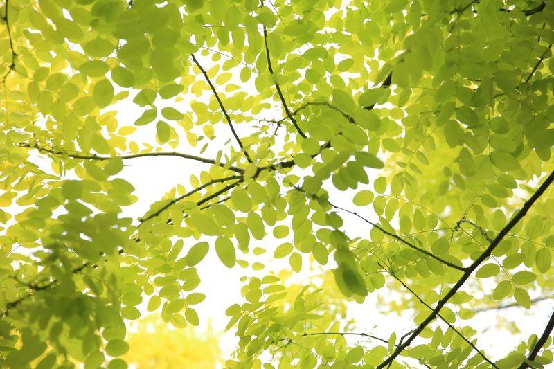 Plant Low Angle