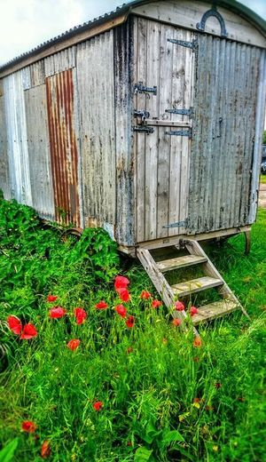 Old Caravan Abandoned Architecture Barn Building Exterior Built Structure Caravan Corrugated Iron Day Flower Grass Growth House Nature No People Old Buildings Old Wagon Outdoors Poppies  Poppies In Bloom Wood - Material