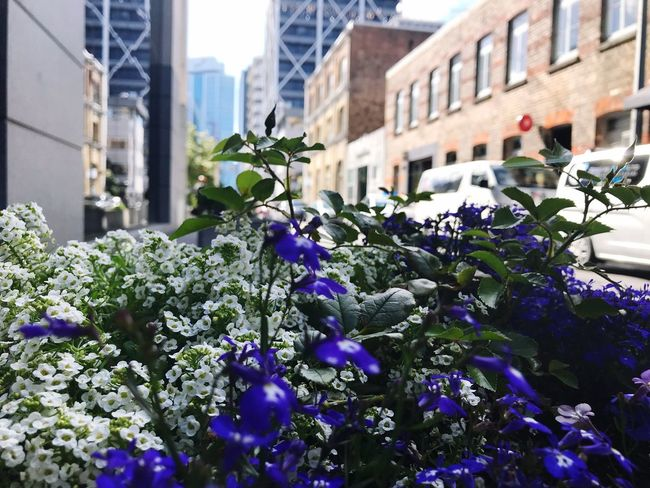 City Background City Decoration Side Walk Flower Architecture Building Exterior Built Structure Outdoors Day Growth Blooming City Freshness Close-up No People
