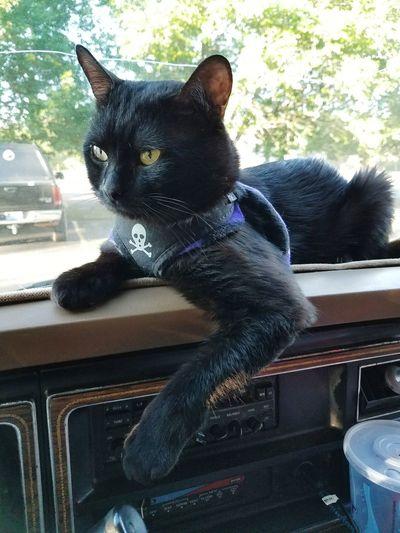 Charles 'as Is' Eyeem Photography One Animal Portrait EyeEm Black Cats Taking Photos ❤ Colorado Springs CO USA Animal Themes