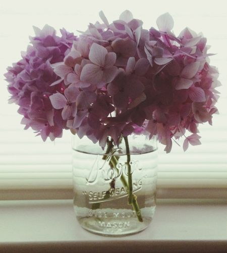 Hydrangea Kerr Mason Jar Bouquet Purple Flowers Window Sill Scotts Valley California United States Pastel Power