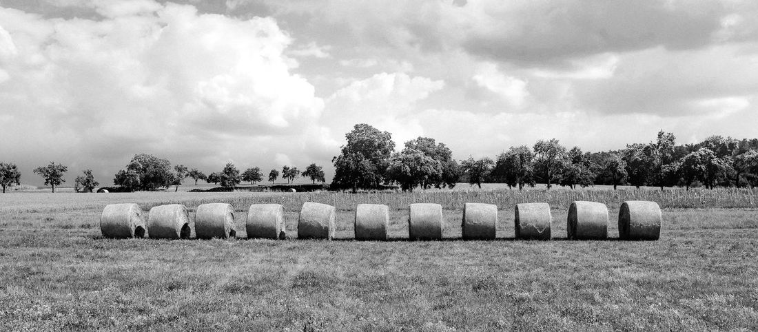 Eleven hay bales in a rural territory in Germany Agriculture Panorama Agriculture Farm Grass Hay Landscape No People Outdoors Panoramic Photography Rolled Up Rural Landscape Rural Scene