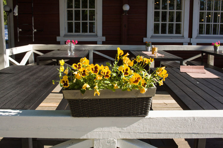 Architecture Beauty In Nature Building Exterior Built Structure Chair Day Flower Flower Head Freshness Nature No People Outdoors Plant Sunlight Table Wood - Material Yellow