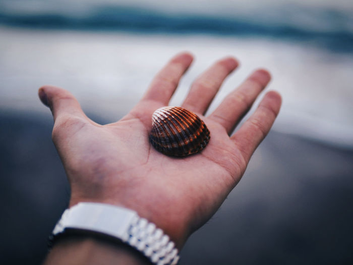 Perspectives On Nature Human Hand One Person Day Outdoors Adult Followme Love Bokehphotography PortraitPhotography Shell Sea Travel Photography Photo Of The Day Nature Fresh On Market 2017