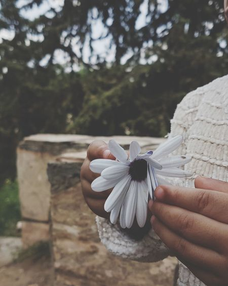 Midsection of person holding white flowering plant