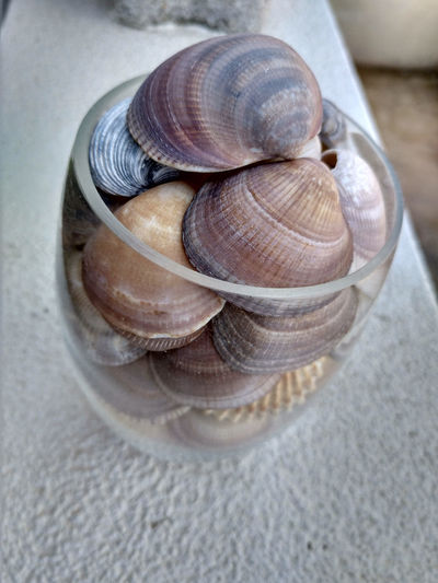 High angle view of seashells in container on table