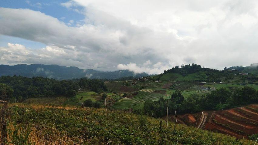 Thailand Chaingmai Monjam Tree Mountain Tea Crop Rural Scene Agriculture Irrigation Equipment Field Sky Landscape Cloud - Sky