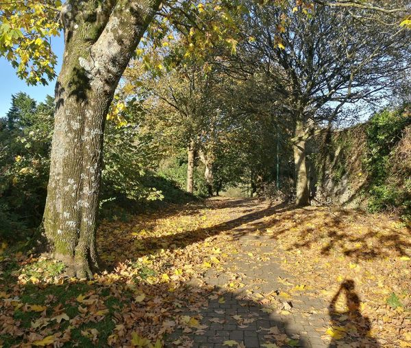 The sun makes all the difference Yellow Leaves Shadows & Lights Autumn Leaves Autumn Pembrokeshire Wales❤ Tree Shadow Sunlight Sky Landscape Woods Tree Trunk Pathway Tranquility Greenery Walkway Forest Treelined Sunrays Green