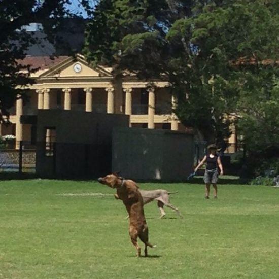 Dog Catch...