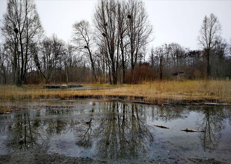 Tree Water Lake Flood Reflection Sky