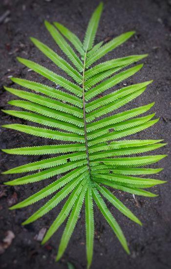 Fern Botany