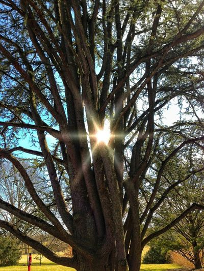 Trees Sun LongwoodGardens Low Angle View Tree Sunbeam Outdoors Nature Sky Day No People Beauty In Nature