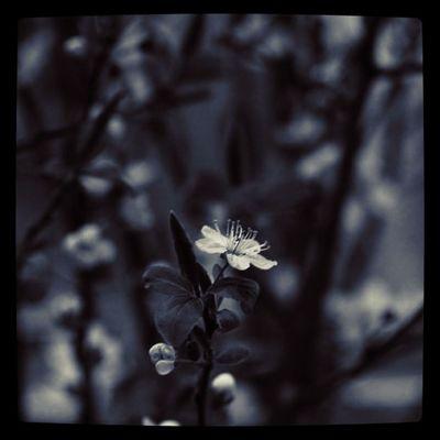 little darling Flowers Blackandwhite Details Bw Lobo_bw Lobo_flowers