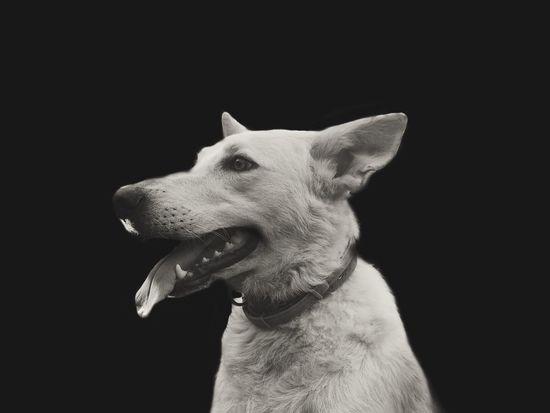 Waf Dog Dogs Dogslife