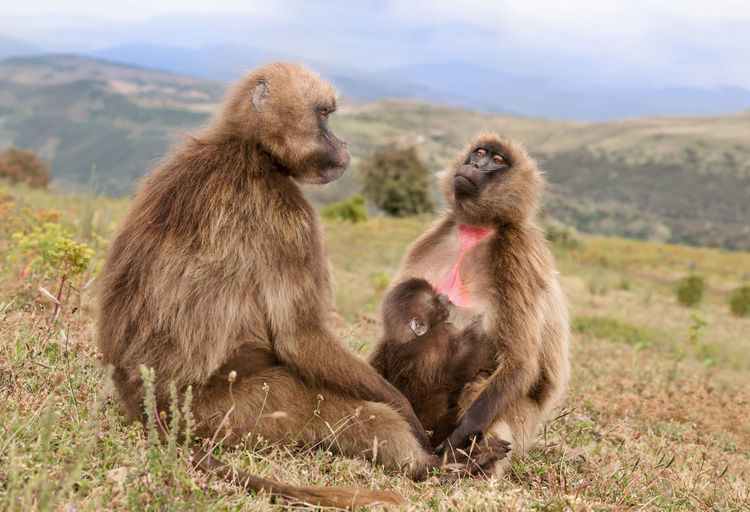 Monkeys sitting on a land