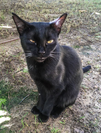 Animal Themes Black Kitten Cat Day Domestic Animals Domestic Cat Feline Grass Mammal No People One Animal Outdoors Pets Portrait Siamese Cat Sitting Whisker Wink