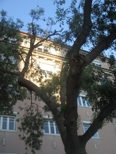 Alvalade, Lisbon Architecture Architecture And Nature Beautiful Day Beauty In Nature Branch Building Exterior Built Structure City Cityscape Day Growth Low Angle View Nature No People Outdoors Pink Building Sky Spring Day Spring Day In Alvalade, Lisbon Sunlight Sunlight Sunlight Through The Branches Sunlight On The Building Tree