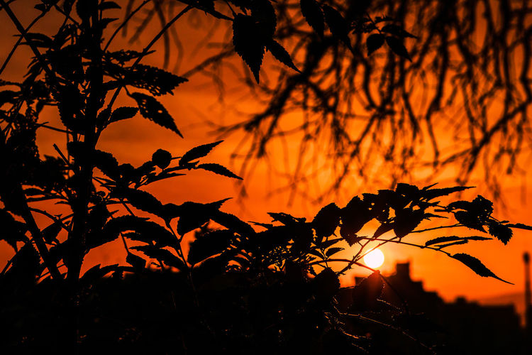 Sun Sunlight Sky Sunset Orange Color Nature Outdoors Beauty In Nature Sunrise Plant Silhouette Growth Tree Tranquility No People Scenics - Nature Branch Focus On Foreground Tranquil Scene Close-up Idyllic Capture Tomorrow