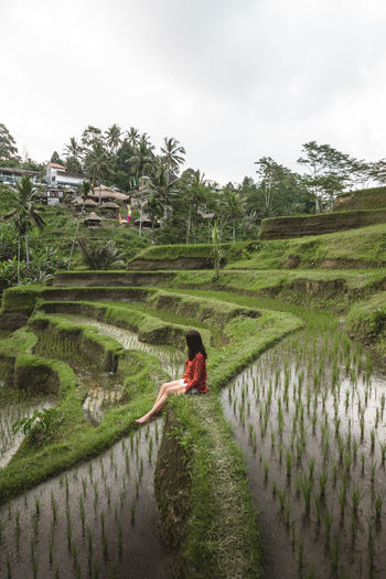 Lonely girl sitting among rice terraces Bali Mother Nature Serenity Beauty In Nature Greenery Lonely Girl Lonely Girl Sitting Lonely Woman One Person Palm Trees Peaceful Landscape Rice Field Rice Paddy Rice Terraces Terrace Field first eyeem photo EyeEmNewHere An Eye For Travel