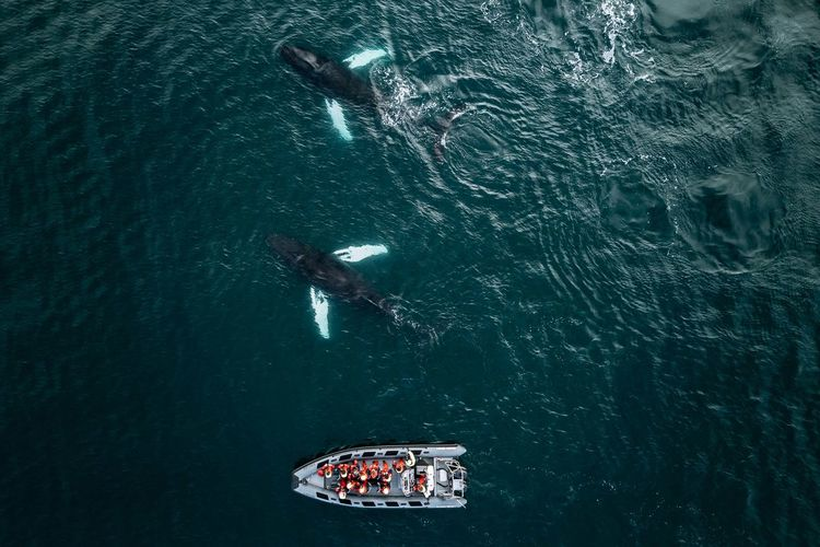 High Angle View Of Whale Swimming By Boat In Sea