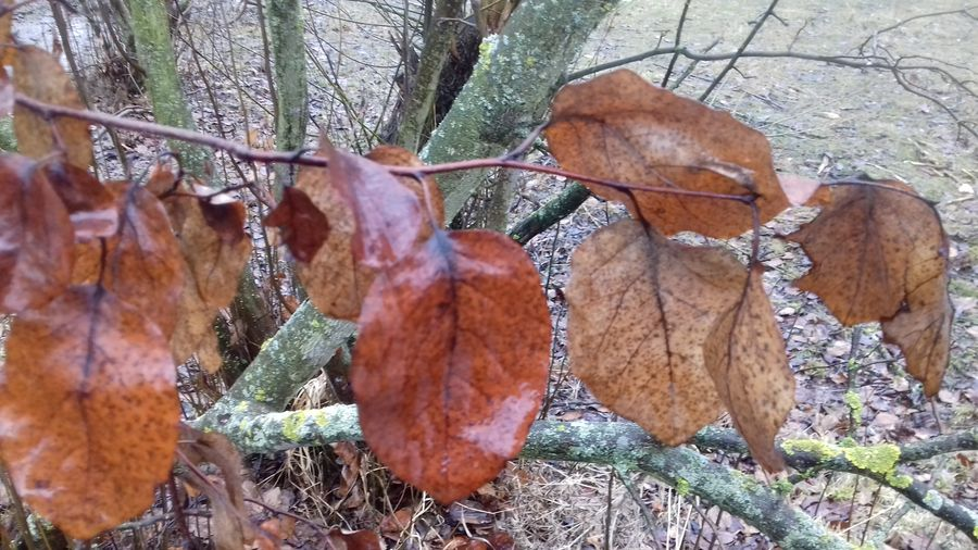 лист дерев