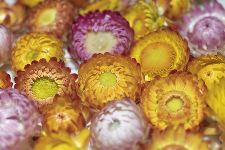 Full frame shot of yellow flowers for sale