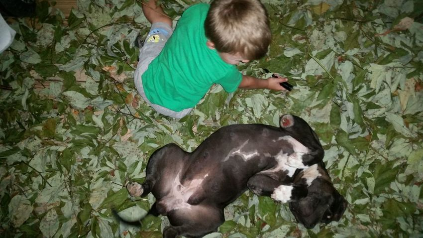 Best Friends ❤ Fun💕 💯 Country Life Family 🙏🙌 👫 Grandkids 💙💛💜 Missouri Ozarks, USA 💥💖 Pit Bull EyeEm Selects Childhood High Angle View Green Color Friend