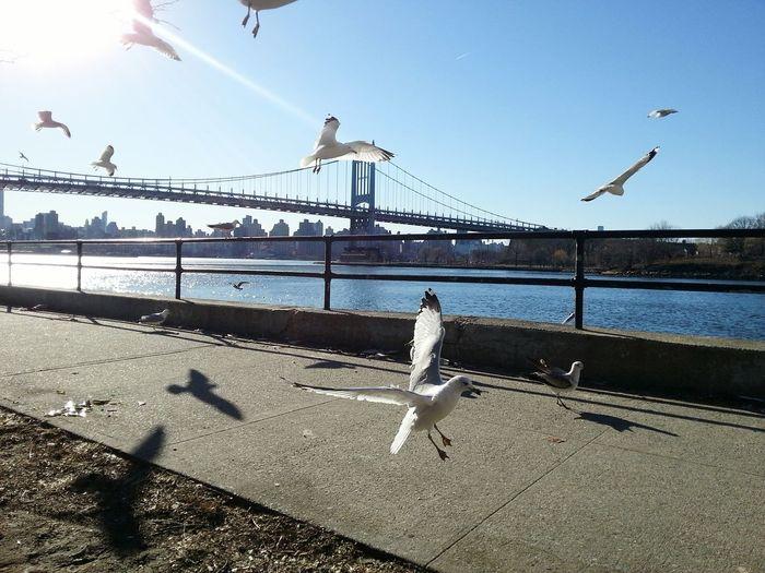 Seagulls against the sky