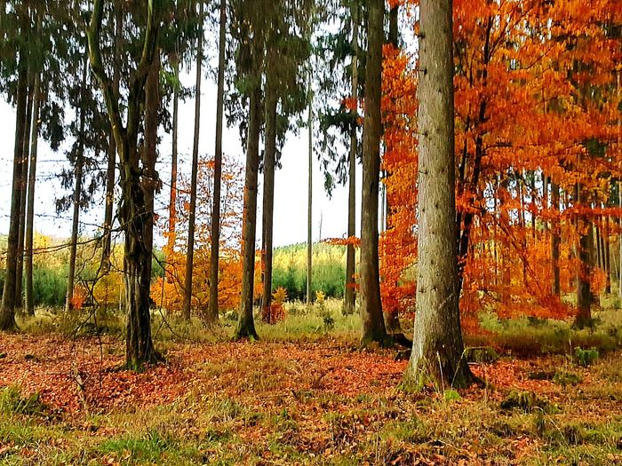 Field Day Tree No People Outdoors Nature Hello World ✌ Backgrounds Tree TreePorn Trees And Sky Forest Photography Forest Autumn Autumn Colors Autumn Collection Autumn 2017 Forestlovers Walking Around Natur Nature Photography Beauty In Nature Landscape Leaves Warmcolours The Great Outdoors - 2018 EyeEm Awards