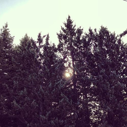Wanna go #trees #pines #pino #arboles #sol #sun #skyporn #sky #woods #bosque #igscout #_wg #instapic #instagramer #insta_crew #instamillion #tagstagramers #instago #tagsforlikes #photooftheday #instagroove #igersmadrid #picoftheday #iphonesia #latergram Igersmadrid Instago Sun Insta_crew Sky Igscout Trees Pines Tagsforlikes Woods Instagramer Sol _wg Photooftheday Instagroove Skyporn Instapic Iphonesia Instamillion Picoftheday Tagstagramers Bosque Arboles Latergram Pino